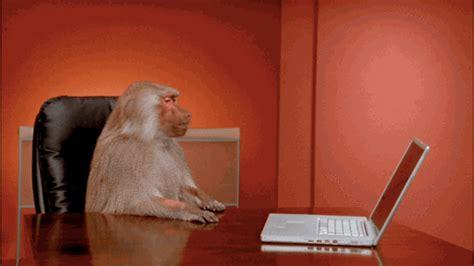 but ordinateur de bureau singe pousser ordinateur bureau pas envie de travailler