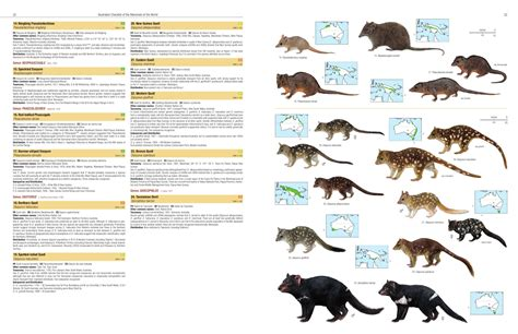 Illustrated Checklist of the Mammals of the World Lynx
