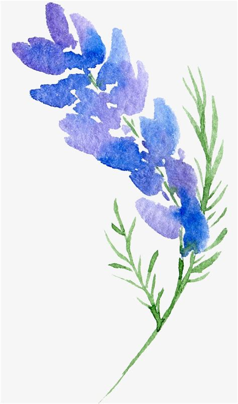 Flower No Background Transparent Background Floral Botanical Watercolor Flowers