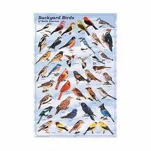 Backyard Birds of North America Poster: North American