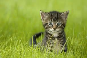 cat pair names cat names 101 more great pairs of names for cats
