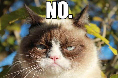 Grumpy Meme Face - grumpy cat no memes yes memes