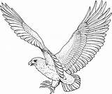 Eagle Coloring Pages Printable sketch template
