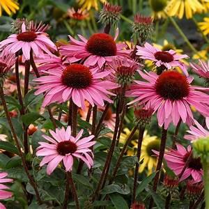 Plant, Walk, Native, Plants, Of, Iowa, Woodies, Prairie, Plants, Perennials