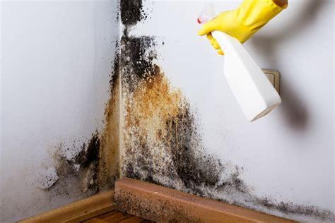 black mold  ways  kill   natural home remedies