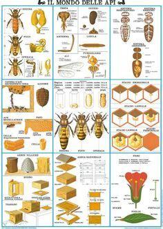 ameisen im bienenhaus bildergebnis f 252 r ameisen projekt kindergarten tiere fourmis insectes und faune et flore