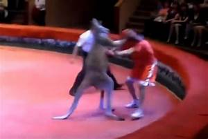 Got Them Hands: Dude Gets Owned When Slap Boxing His ...