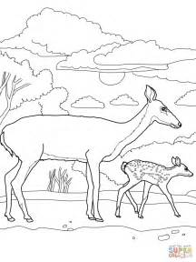 White Tail Deer Baby And Mother Coloring Page Free