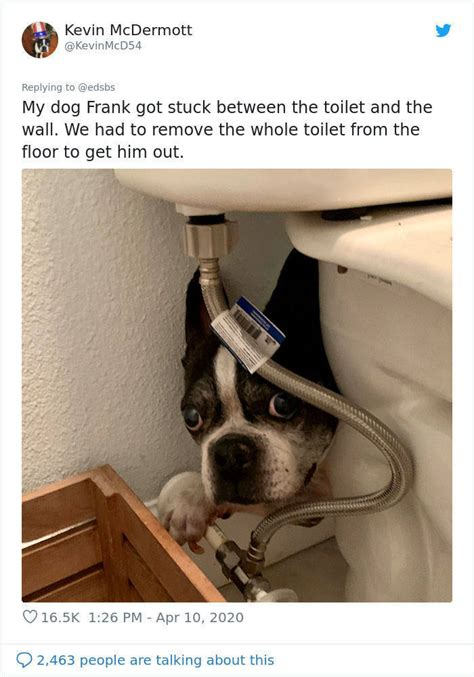dumbest dogs  barnorama