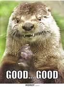 Otter Memes   Funny Ot...