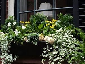 Blumenkästen Bepflanzen Sonnig : boston brownstones for fall window boxes pinterest ~ Orissabook.com Haus und Dekorationen
