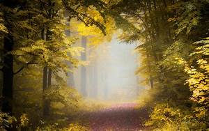 nature, , landscape, , fall, , path, , forest, , mist, , morning
