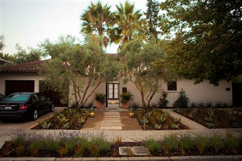 olive tree landscaping olive trees in front yard home ideas outdoor pinterest trees olives and olive tree