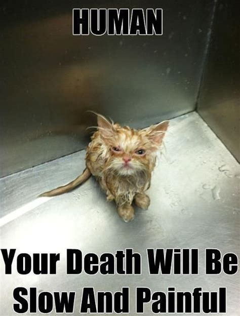 funny pics cats painful death lmao pinterest