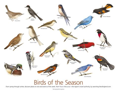 gt yankee magazine birds of new england premium 2004