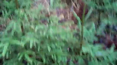 Cehs.lv rotā Ziemassvētku eglīti - YouTube