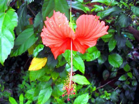 Medicinal Plants And Their Malayalam Names  Mohamed Iqbal