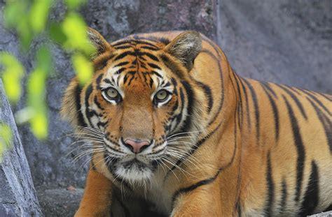 Free Jungle Animals, Download Free Jungle Animals png ...