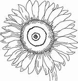 Sunflower Coloring Pages Georgia Keeffe Printable Flower Colouring Drawing Flowers Sheets Sunflowers Simple Clipart Sheet Gogh Van Adult Sunny Easy sketch template