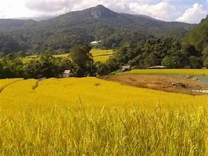 Thailand Off Road Mountain Biking Adventure -- All ...