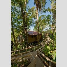 Belize Tree Houses  Belize Treehouse Resorts  River View
