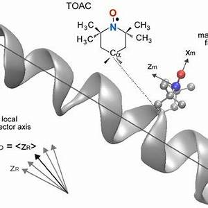 (PDF) Dynamics and Conformational Studies of TOAC Spin ...