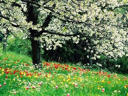 Spring Desktop Season Background Flowers Wallpapers Pixelstalk