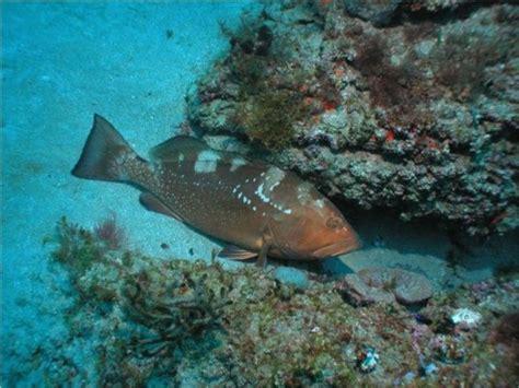 grouper habitat fishing under rock fish holds tactics surefire summer tips