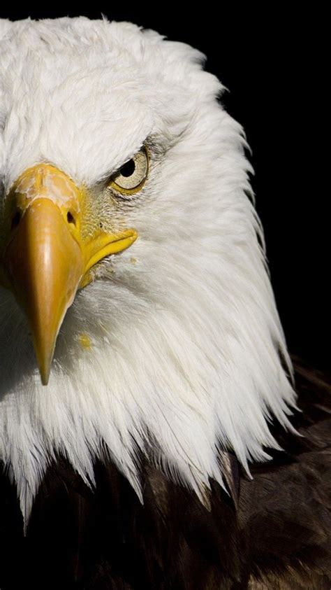 pin  bill coltharp  eagles eagle wallpaper eagle