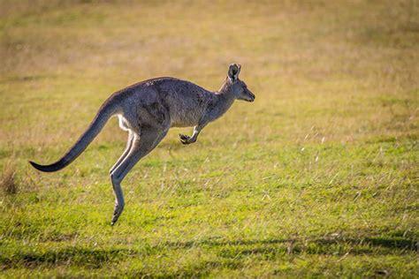 Australie, à La Découverte D'un
