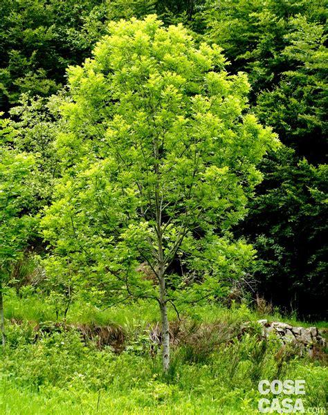 alberi per giardino vuoi l ombra in giardino scegli le piante giuste cose