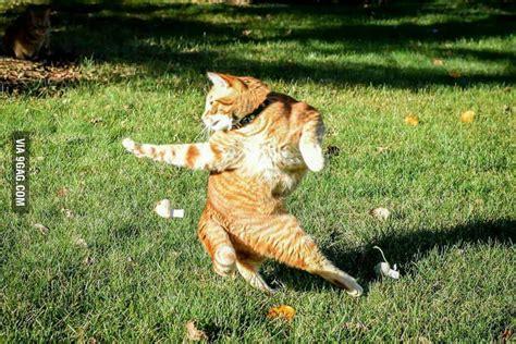 Kungfu Cat 9gag