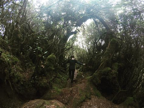 Ohh Jess Mossy Forest Cameron Highland