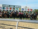 Tampa Bay Downs Day Trip | Advantage Cruises & Tours Blog