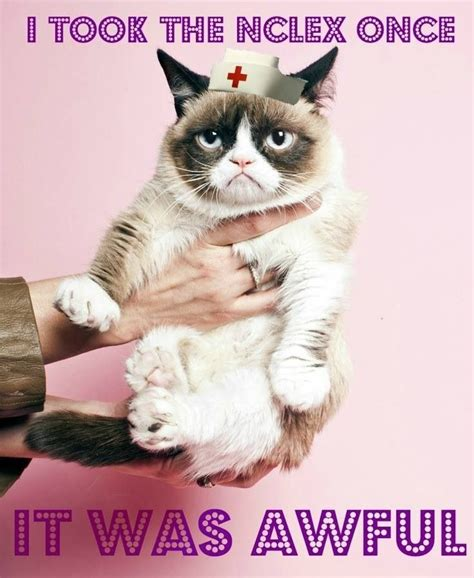Nclex Meme - pin by michelle valdespino on rn life pinterest nclex grumpy cat and nurses