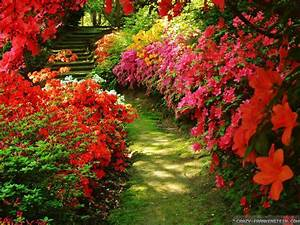 Red Flowers For Garden 20 Cool Hd Wallpaper ...
