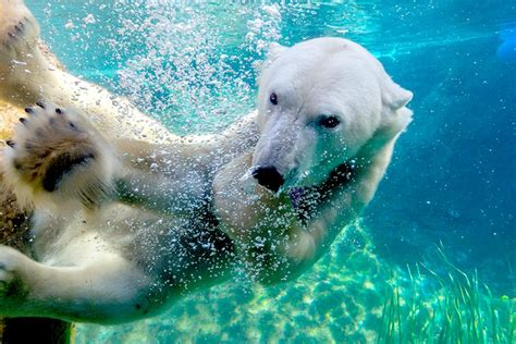 zoo zoos diego san worlds bear polar adventure travel california