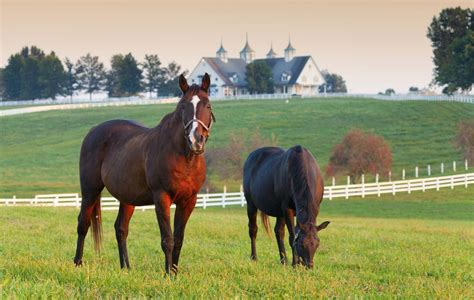 kentucky horse park horses lexington farm country hotels ranch famous thoroughbreds animals most near thoroughbred bluegrass choice pasture montana equine