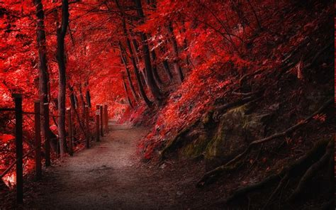Landscape, Nature, Fall, Red, Path, Fence, Mountain