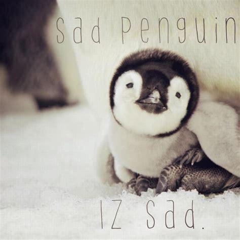 Cute Penguin Meme - sad penguin know your meme