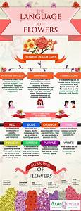 The Language Of Flowers Infographic Language Of Flowers