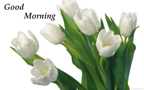 Good Morning With Flowers Pictures, Images, Photos