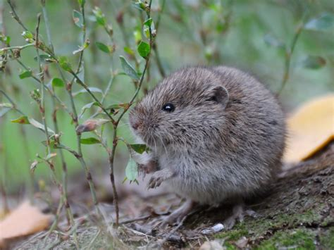 How To Keep Voles Out Of Your Yard