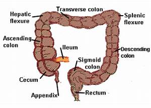 In which part of the colon is splenic flexure located, and ...