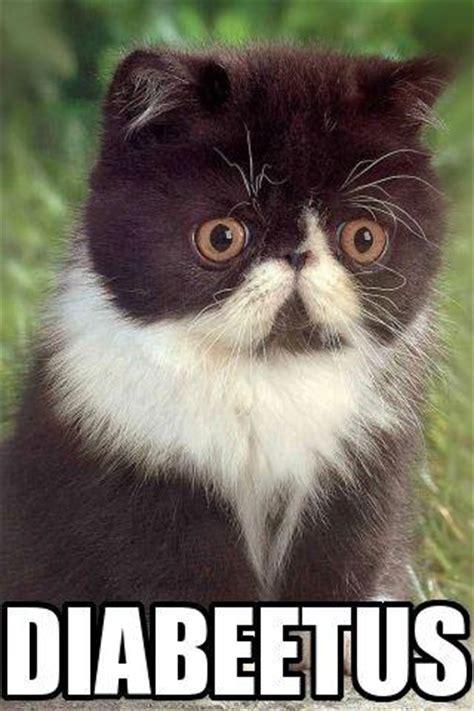 Diabeetus Cat Meme - image 21013 diabeetus know your meme