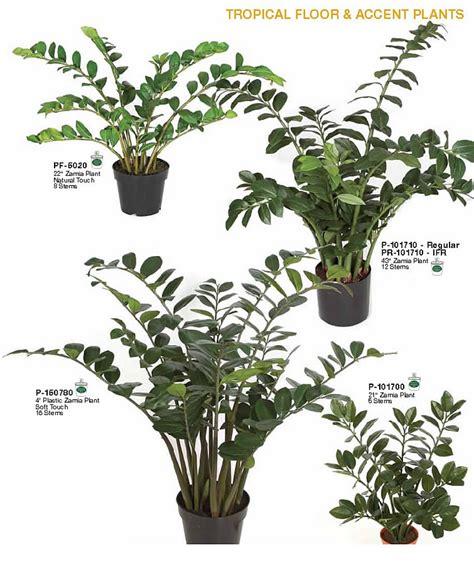 accent trees zamia accent plants indoor tropical floor accent plants