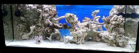 Aquarium Im Wohnzimmer by Bernd Pinkert Becken 30815 Mein Traumriff Im Wohnzimmer