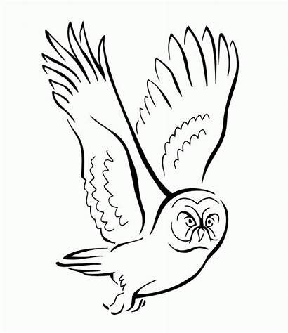 Owl Coloring Flying Bird Pages Prey Seeking