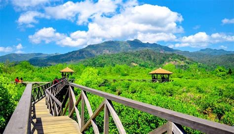 travelingyukcom wisata hutan mangrove  jawa timur