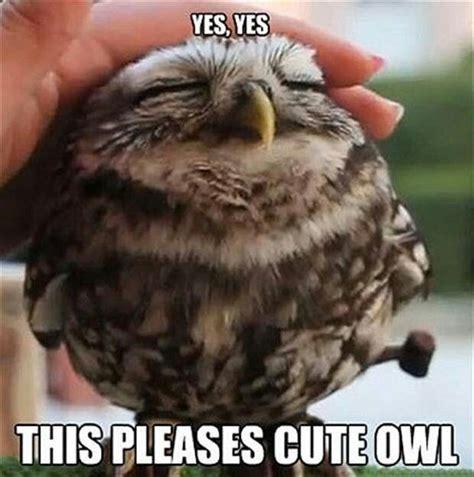 Owl Meme - 11 best images about owl memes on pinterest da fuq little owls and too funny